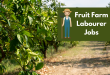 Fruit Farm Labourer Jobs In Canada For Pakistanis