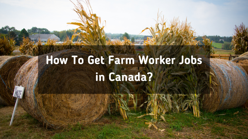 How To Get Farm Worker Jobs in Canada in 2021?